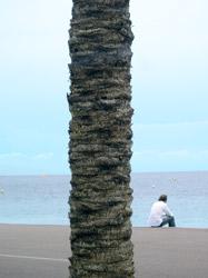 Palme am Sandstrand von St. Tropez