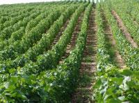 Weingut Südfrankreich